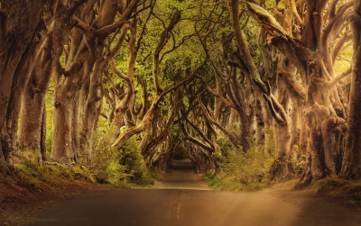 Dark Hedges - Berühmte Strasse aus Games of Thrones