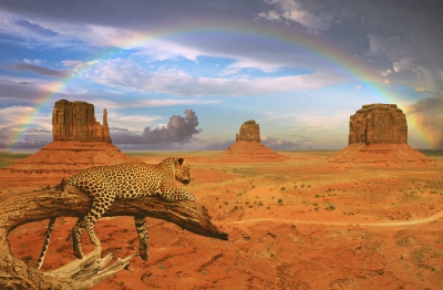 Leopard im Monument Valley